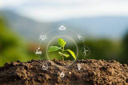 plántula e icono sostenible.