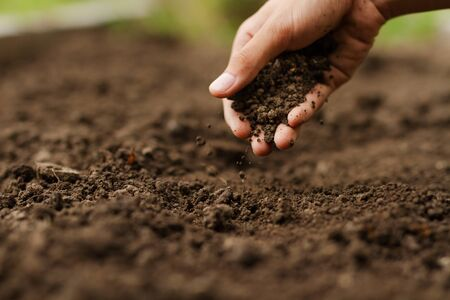 Expert hand of farmer checking soil health before growth a seed of vegetable or plant seedling. Gardening technical, Agriculture concept.