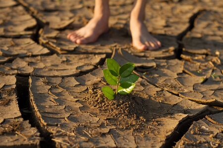 Planting a tree on dry cracked land with children stand on side metaphor, Climate change solution, Hope, water crisis