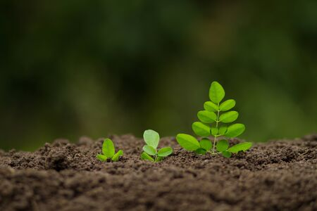 Growing vegetable and Business concept.
