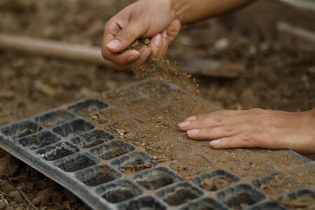Dirty hand of expert farmer checking soil health before sow a seed or grow a seedling into a seed tray at organic farm.