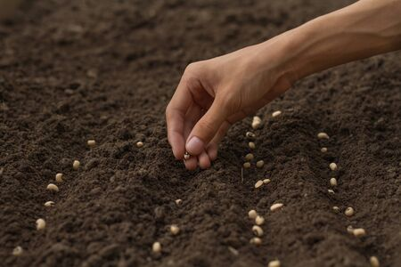 Home gardening expert, Hand drop some seeds of vegetable to health soil. sowing seed on prepared soil at backyard garden.