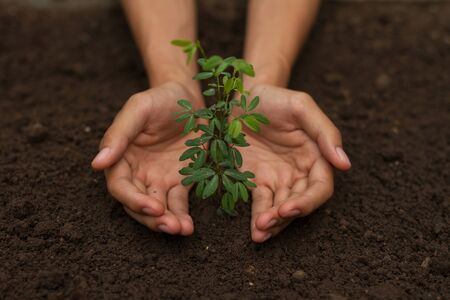 Hand protect small plant from pollution of environment and climate change to make a new future, World Environmental and Global warming concept. Zdjęcie Seryjne