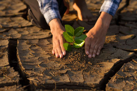 Hand of young people planting a small plant, seedling on dry cracked dirt metaphor the nature can be recovery by our hand, climate change solution and stop global warming concept. 免版税图像