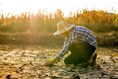 Young asian man planting the small plant seedling to dry cracked dirt to recovery land with new forest and stop climate change or global warming.