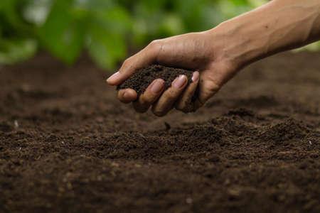 Hand grasp soil at vegetable garden