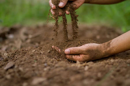 Hand pouring soil checking quality for sow or grow a seedling of vegetable.