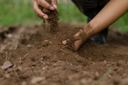 Hand of farmer pouring soil checking quality prepare sowing seed and grow vegetable