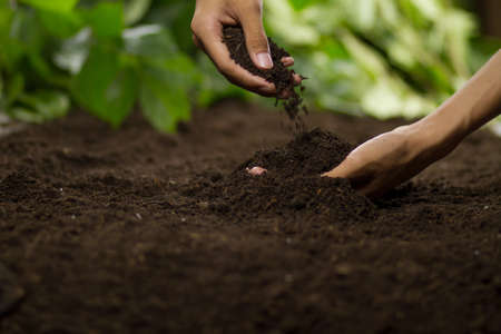 Hand pouring soil checking quality prepare growing seedling at home garden. Zdjęcie Seryjne - 151415395