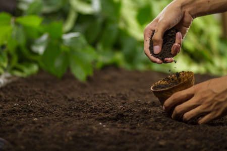 Hand pouring soil into a pot preapre grow vegetable or flower Zdjęcie Seryjne - 151415492