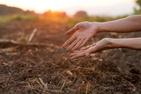 Black Soil in hand of gardener at garden, Checking soil health for prepare grow vegetable and seedling.