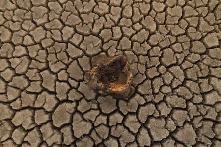 Dead tree on middle dry cracked earth, metaphor climate change, environmental damage and water crisis. top view