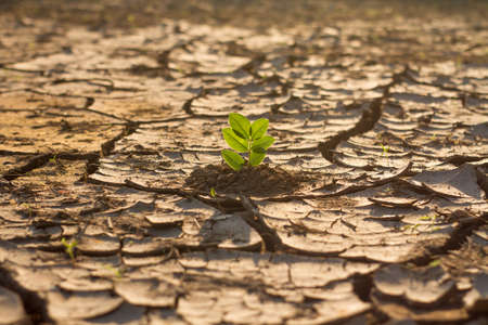 Green plant grow in middle dry cracked earth. recovery environmental from damage of climate change and human activities concept.