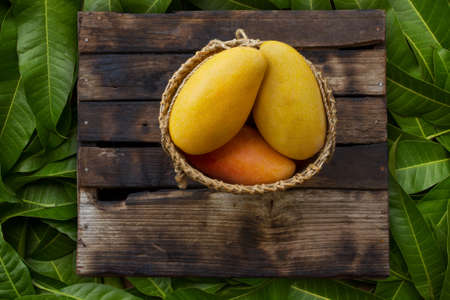 Fresh ripe mango tropical fruits in basket on wooden desk with farm background. Mango juice and product concept.