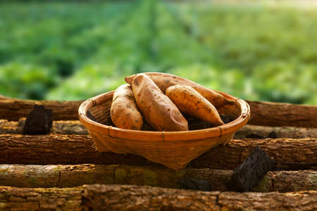 Baked sweet potato in basket with farm background