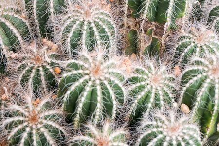 background pattern: Round cactus pattern background Stock Photo