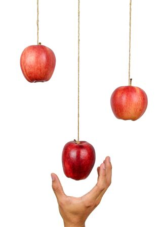 Hand reach to grab the hanging apple isolated on white background. Low hanging fruit concept.