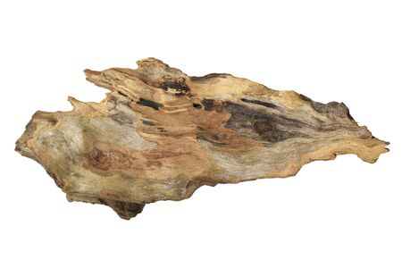 Driftwood/ aged wood isolated on white background. Piece of driftwood driftwood close up for aquarium.