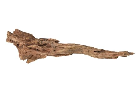 Driftwood aged wood isolated on white background. Piece of driftwood driftwood close up for aquarium.