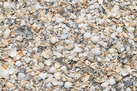 Close up scrap of seashell on the beach for background. Reklamní fotografie