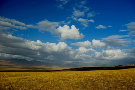 bayanbulak grassland photo