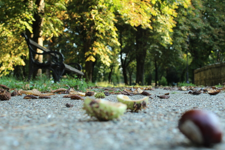 chestnuts in the park