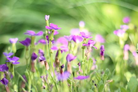 flower bed of little purple flowers