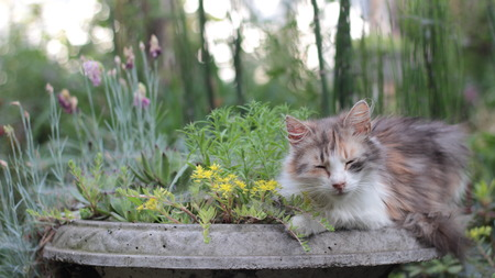 cute sleepy cat in the pot