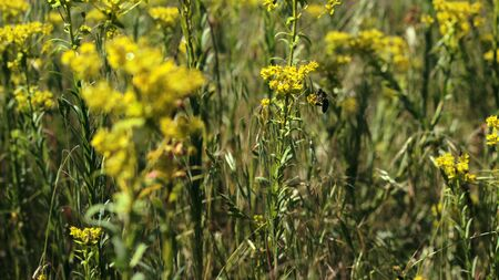 Bee on the meadow,collecting pollen Stock Photo