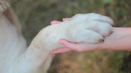 best protection: Dog paw in the hand