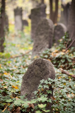 A old Jewish tombstones lost in green photo
