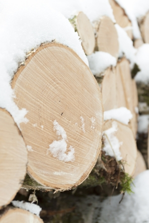 Wood pile with snow in forest photo