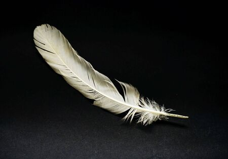 a white feather on black background Stock Photo - 4153108