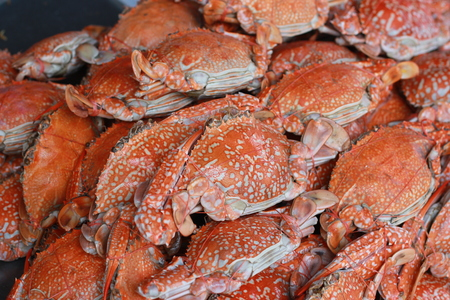 Steamed crab photo