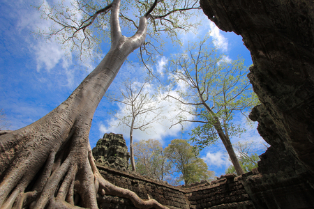 Ta Prohm Temple of Angkor Thom Cambodia