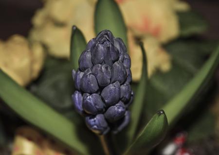 flower leaf: Purple flower with green leaf