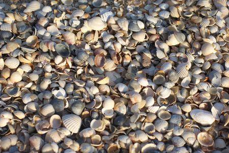azov sea: Azov sea cockle-shells beach,