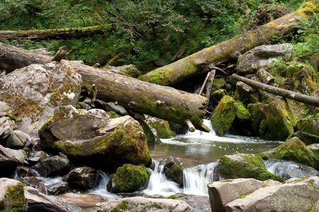 Landscape with rapid river and fallen tree Stock Photo - 5757900