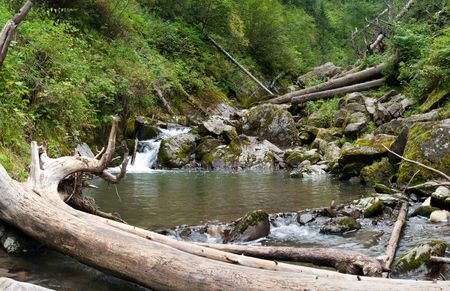 Landscape with river and fallen tree in the forest photo