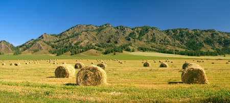 Harvest. Autumnal field with rolled haystacks. photo