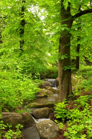 Beautiful forest landscape with small brook photo