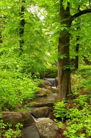 Mooi boslandschap met kleine beek Stockfoto