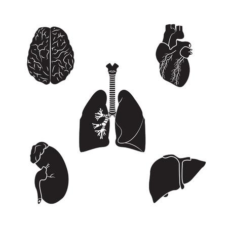 viscera: Vital organs icons set Illustration