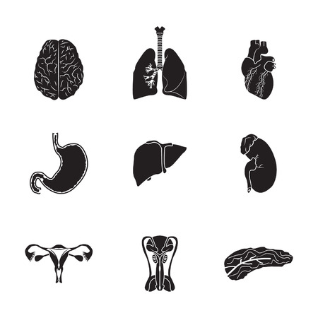 pulmones: Human organs set Illustration
