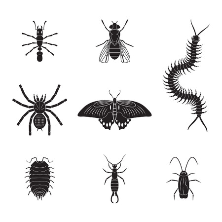 centipede: Set of insects volume 2
