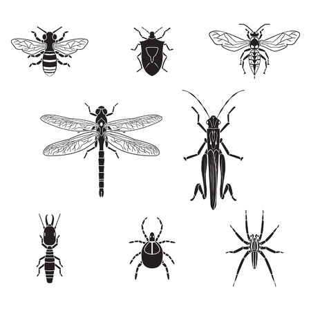 an insect sting: Set of insects volume 3 Illustration
