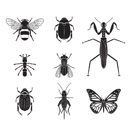 Set of insects volume 4
