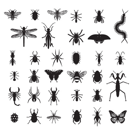 centipede: Set of vector insects Illustration