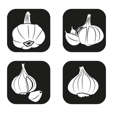 garlic: Garlic icon in four variations
