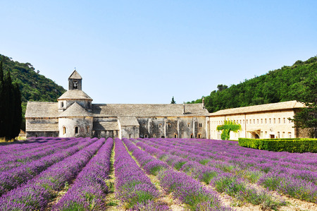 lavande: Abbaye de Senanque with lavender field in the foreground